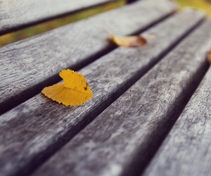 autumn, leaf, and vyer image