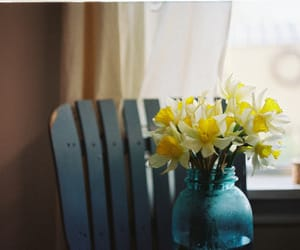 narcissus, flowers, and vintage image
