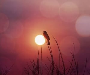 bird, sunset, and photography image