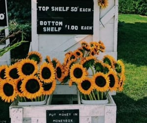 sunflower, flowers, and summer image