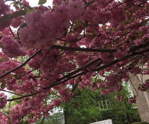 bloom, nature, and pink image