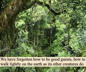 nature, quotes, and earth image