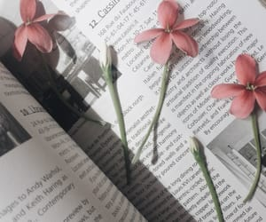 books, dry, and flowers image