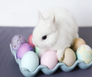 animal, bunny, and easter image
