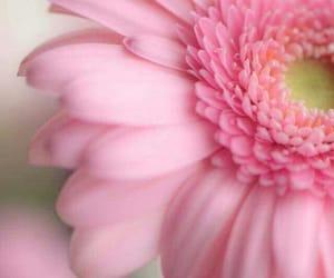 blossom, macro, and розовый image