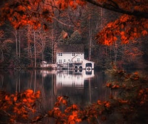 autumn and trees image