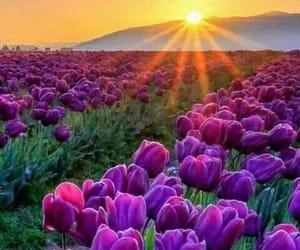 flowers, nature, and sunrise image