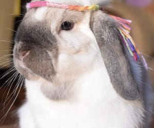 animal, bunny, and cutie image
