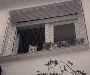 cat, animal, and place image