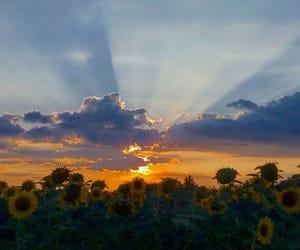 flower, sky, and sunflower image