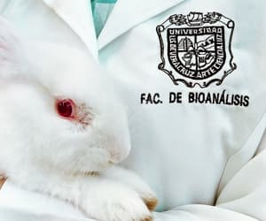 bunny, feed, and clinica image