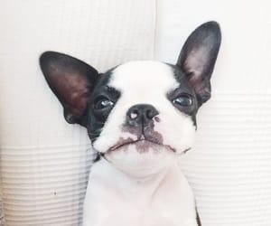 animal, dog, and pets image