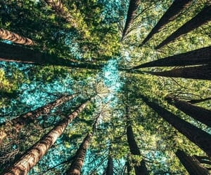 nature, trees, and forest image
