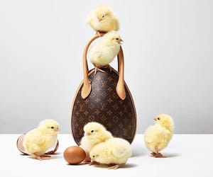 animals, bags, and easter image