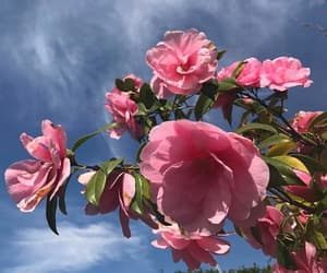 flowers, blue, and clouds image