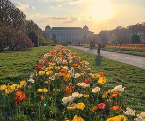 flowers, photo, and springtime image