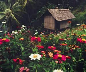 flowers, nature, and house image