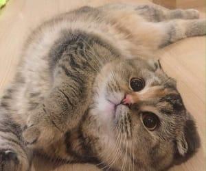 animal, cat, and kitten image