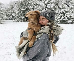 autumn, snow, and dog image