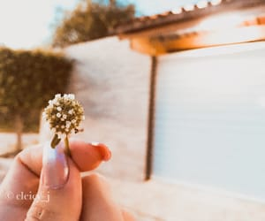 blossom, flowes, and tumblr image