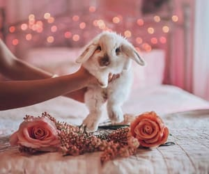 animals, bunny, and fairy lights image