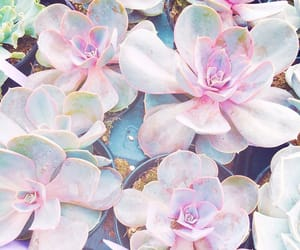 pastel, pink, and plants image