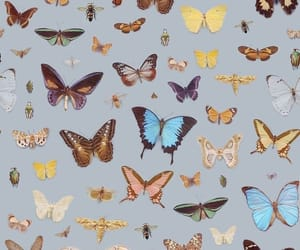 butterfly, wallpapers, and backgrounds image