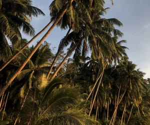 beach, palm trees, and palmtrees image