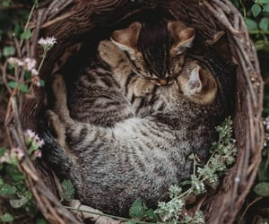 cat, kitten, and nature image