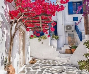 flowers, Greece, and inspiration image