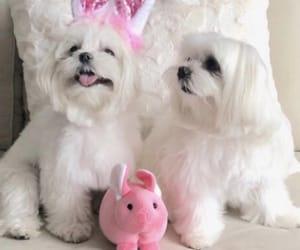 animal, dog, and easter image