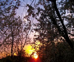 blossom, spring, and sunset image