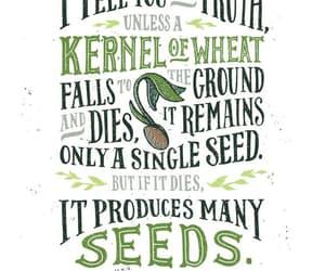 bible, john, and seeds image