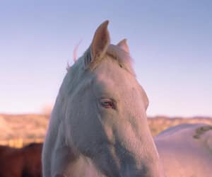 horse, aesthetic, and animals image