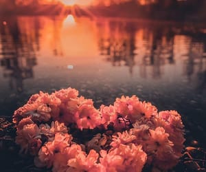 nature, photography, and flowers image
