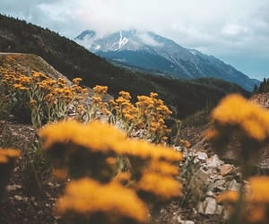 beleza, flowers, and photography image