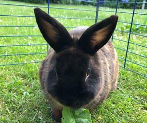 animal, brown, and bunny image