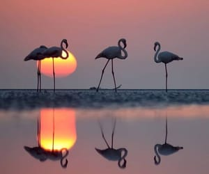 animal, reflection, and water image