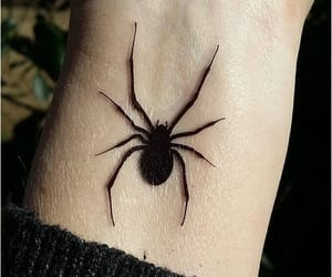 spider and tattoo image
