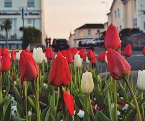 devon, flowers, and torquay image