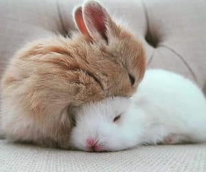 bunnies, fluffy, and tired image