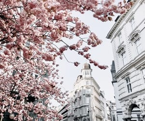 architecture, blossom, and flowers image