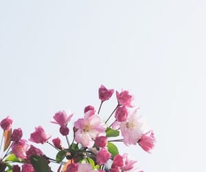 blossom, feed, and inspiration image