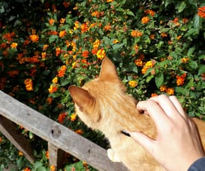 aesthetic, cat, and flores image