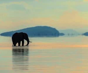 animals, boho, and elephant image