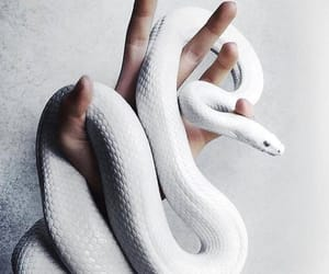 snake, white, and cute image