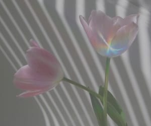 colours, sunlight, and flower image