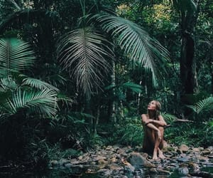 forest, fresh, and jungle image