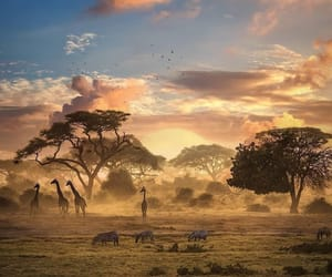 africa, nature, and animal image