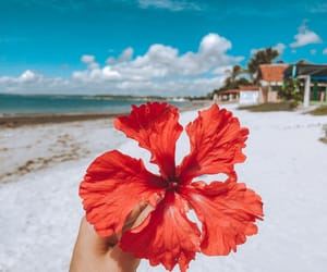 autoral, beach, and blossom image